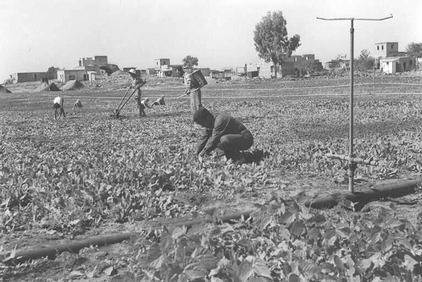 General View Of Rantiya. Note how Palestinian farms are being utilized by Moroccan Arab Jews, 1949 http://ns1.palestineremembered.com/Jaffa/Rantiya/Picture3038.html The above picture was contributed by Prince, Peaceful Israeli